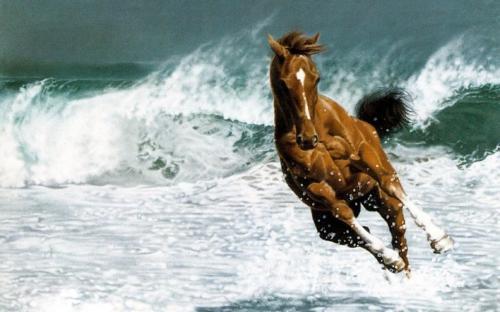 beautiful-horses-Wallpapers
