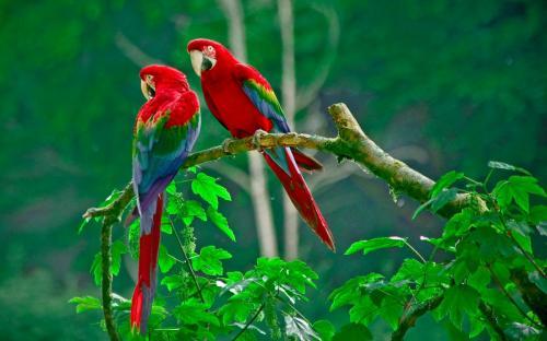 parrots_paradise-wide